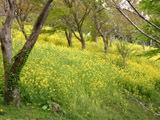 マザー牧場の森の中2