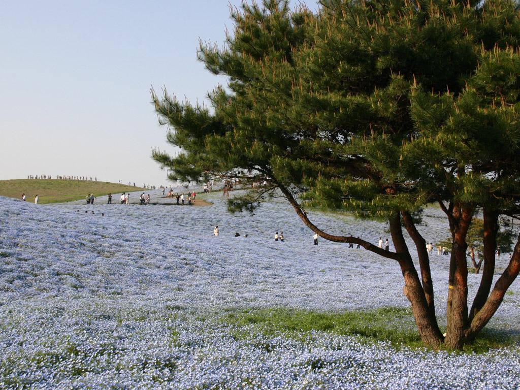 青色の花畑2