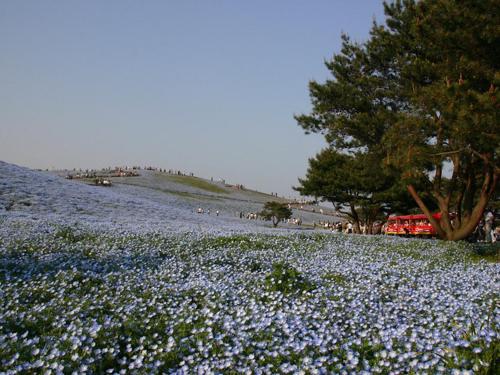 青色の花畑3