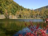 明神池の紅葉