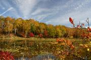 蓮池の紅葉2