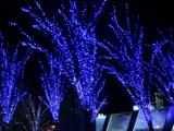 青のイルミネーション1