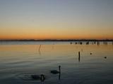 日の出前の湖と鶴