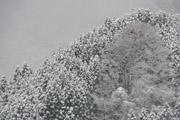 森の雪景色