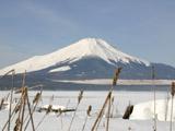 枯れ草と富士山