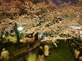 人ごみと夜桜