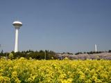貯水塔と菜の花