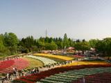砺波チューリップ公園大花壇