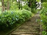 雨引観音の石畳の階段